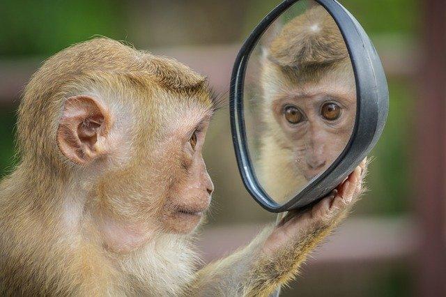 ミラーリング猿